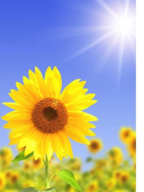 Sol, naturaleza y medio ambiente